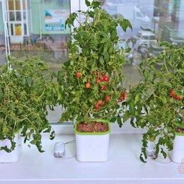 Аксессуары и средства для ухода за растениями - Гидропонная чудо грядка модуль Здоровья Клад X2 проращиватель семян, 0