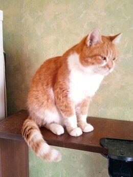 Кошки - Кошка Матильда, 0