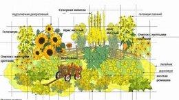 Рассада, саженцы, кустарники, деревья - Клумба № 104,в желтых тонах, 0