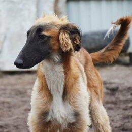 Собаки - Борзая в добрые руки, 0