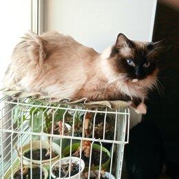 Кошки - Кошка  Мусечка ищет дом, 0
