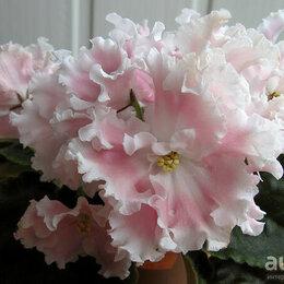 Комнатные растения - Красивые фиалочки, 0