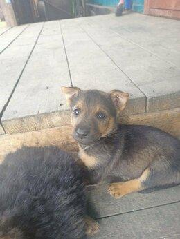 Собаки - Щенки, 0