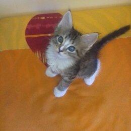 Кошки - Милая и веселая! Кошечка 1,5мес. В добрые руки., 0