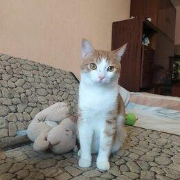 Кошки - Котик Лакки, 0