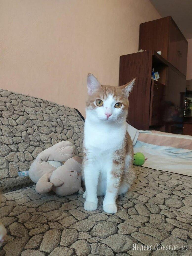 Котик Лакки по цене даром - Кошки, фото 0