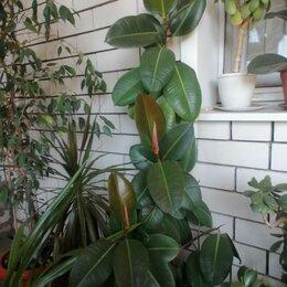 Комнатные растения - Растения большие, 0