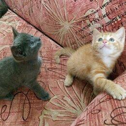 Кошки - 2 маленьких братика ищут дом , 0