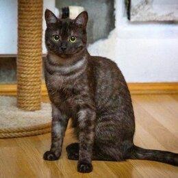 Кошки - Скромный котик Пепси ищет дом., 0
