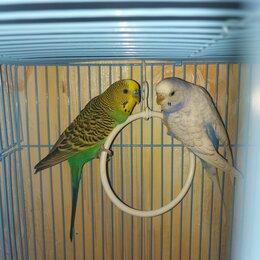 Птицы - Волнистые попугаи девочка и мальчик с клеткой, 0