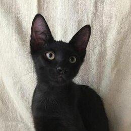 Кошки - Котенок Егорка, 4 мес., 0