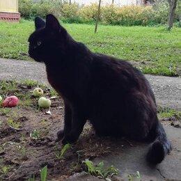 Животные - Черная кошка, 0