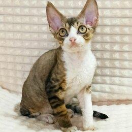 Кошки - Продаются красивые котята девон-рекс., 0