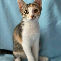 Кошки - Ласковая трёхцветочка Луиза ищет свой дом, 0
