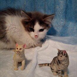 Кошки - Котенок в добрые руки., 0