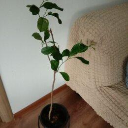 Комнатные растения - Отдам даром цветы, 0