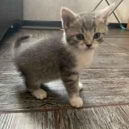 Кошки - Котята (мальчики), 0