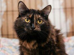 Кошки - Тихая и ласковая Мурушка очень ценит хорошее…, 0