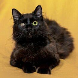 Кошки - Черная пушистая Кутузовна ищет дом, 0