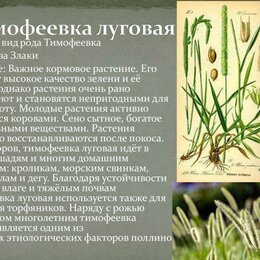 Семена - Семена Тимофеевка, 0