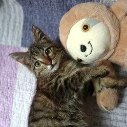 Кошки - Полосатая девочка, 2 месяца, 0