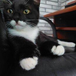 Кошки - Ручная ласковая девочка Манана 8 мес ищет передержку или сразу дом, 0
