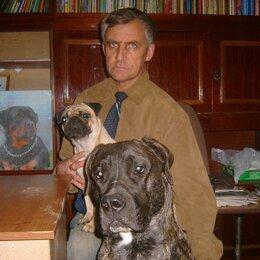 Услуги для животных - Дрессировка собак в Пятигорске, 0