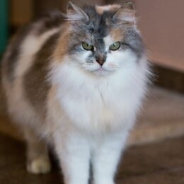 Кошки - Невероятно ласковая Пыша нуждается в доме, 0