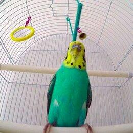 Птицы - Толстый волнистый попугай, 0