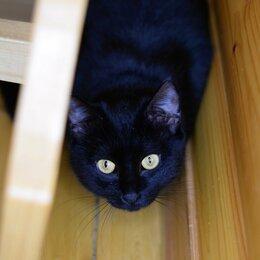 Кошки - Верба - черная кошка с янтарными глазами 1,5 года, 0