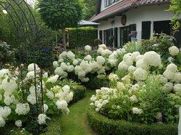 Рассада, саженцы, кустарники, деревья - Цветущие красивые кустарники и многолетние цветы…, 0