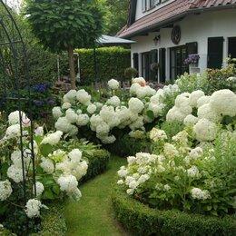 Рассада, саженцы, кустарники, деревья - Цветущие красивые кустарники и многолетние цветы саженцы, 0