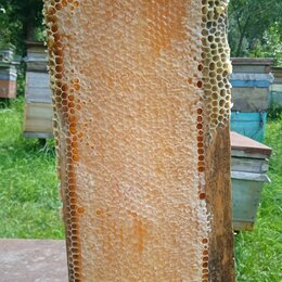 Продукты - Мёд  разнотравье, 0