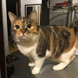 Кошки - Трёшка-трехцветка, сладкая булочка. Кошка в добрые руки., 0
