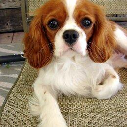 Животные - Нашёл собаку в парке Зарядье, зовут Ева, хозяин отзовись, 0