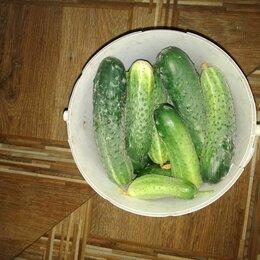 Продукты - огурцы тепличные,очень вкусные,со своего огорода, 0