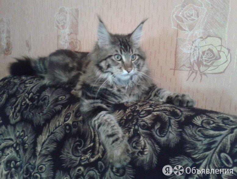 Котенок мейн кун 2 месяца по цене 5000₽ - Кошки, фото 0