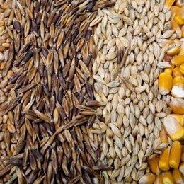 Товары для сельскохозяйственных животных - Зерносмесь (пшеница, тритикале), 0