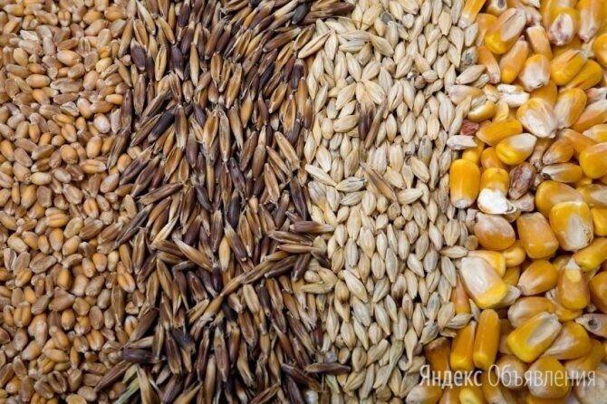 Зерносмесь (пшеница, тритикале) по цене 9000₽ - Товары для сельскохозяйственных животных, фото 0