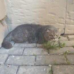 Животные - Вислоухий кот серый, 0