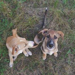 Собаки - Замечательные щенки ищут вас, 0