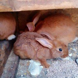 Кролики - Кролики пушистики , 0