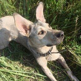 Собаки - Девочка-компаньон 8 месяцев, 0