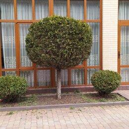 Архитектура, строительство и ремонт - Обрезка деревьев  любых сложностей ландшафтный дизайн, 0