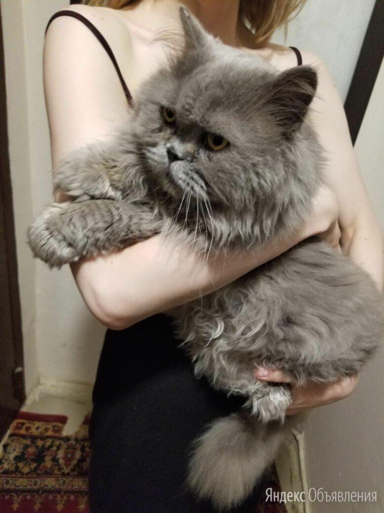 Найдена кошка, Москва, Б.Харитоньевский пер. (метро Красные ворота/Тургеневская) по цене не указана - Животные, фото 0