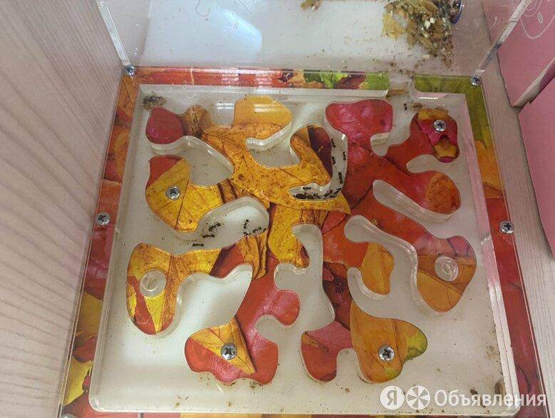Муравьиная ферма по цене 2250₽ - Мягкие игрушки, фото 0