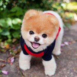 Услуги для животных - Выгул щенков и собак, 0