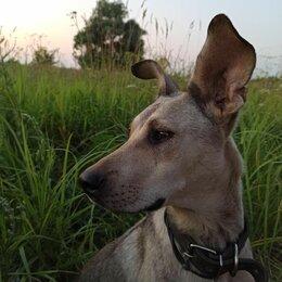 Собаки - Верная собака подросток в дар, 0