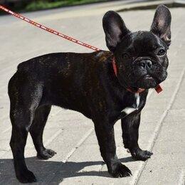 Собаки - Продаю щенка, 0