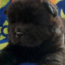 Собаки - Чау-чау собака щенок черный, 0